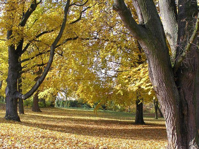 2a5ea11e5ad99 iPeruc.cz - Podzim v parku