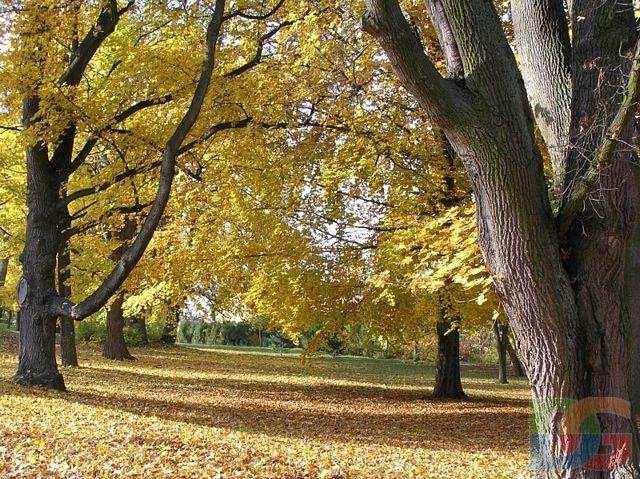 various colors e1336 c1bd4 iPeruc.cz - Podzim v parku